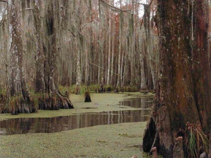 9a swamp
